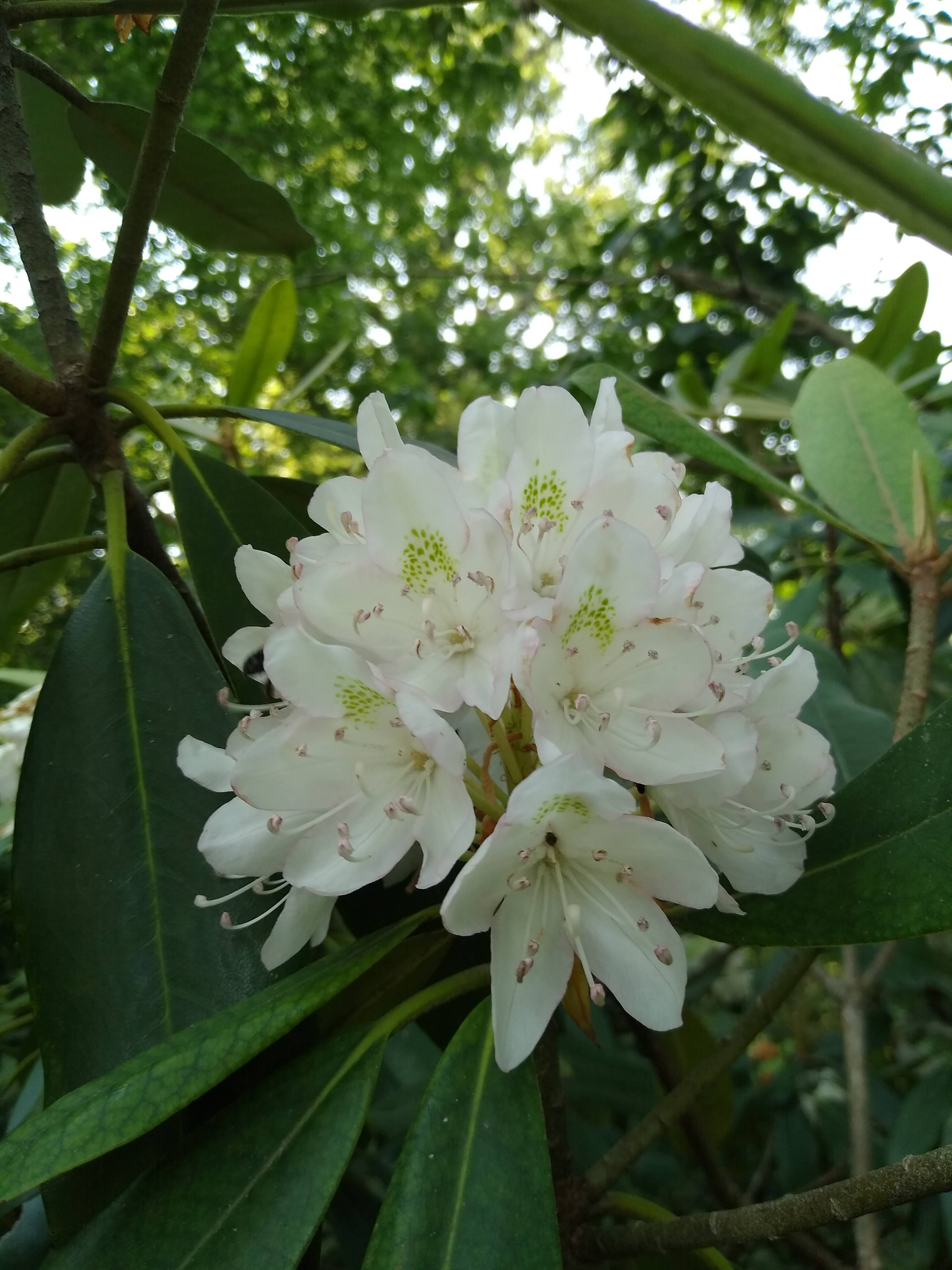 Cluster of white flowers and green leaves