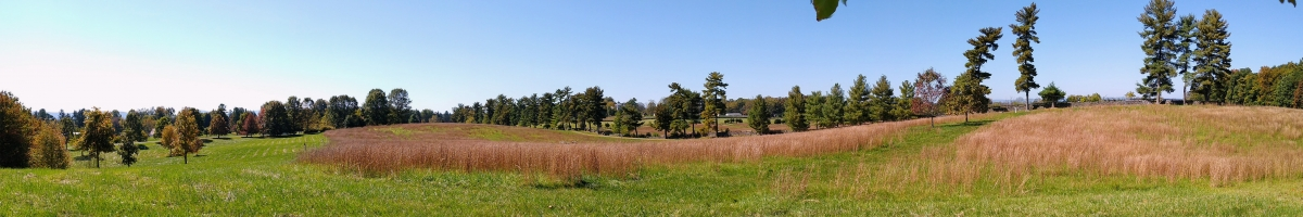 grassy field with row of conifer trees behind