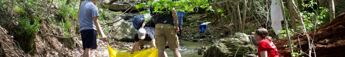 High school students use a kick net to collect aquatic organisms in a forest stream